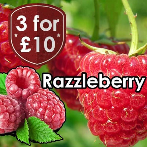 V-Juice Razzleberry E-Liquid